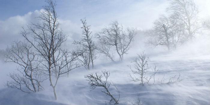 ВСаратовской области обещают холодный иветреный день соснегом